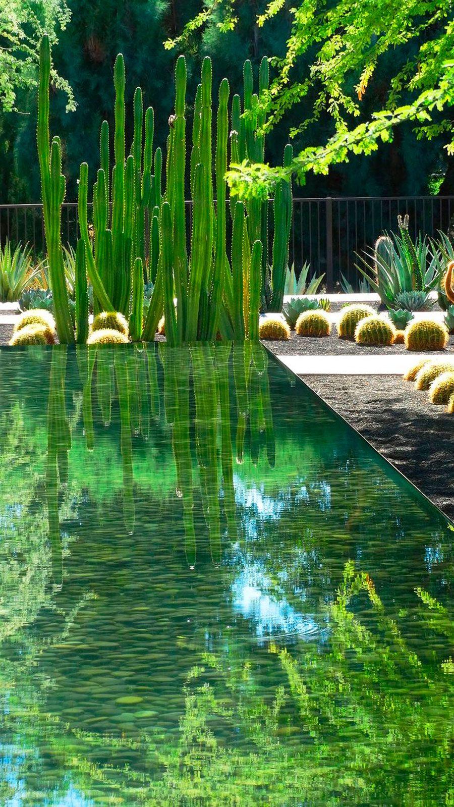 Construimos Sistemas De Tratamiento De Agua Residual Implantando Sobre Sustratos Específicos Especies Acuática Estanques De Jardín Jardines Diseño De Paisaje