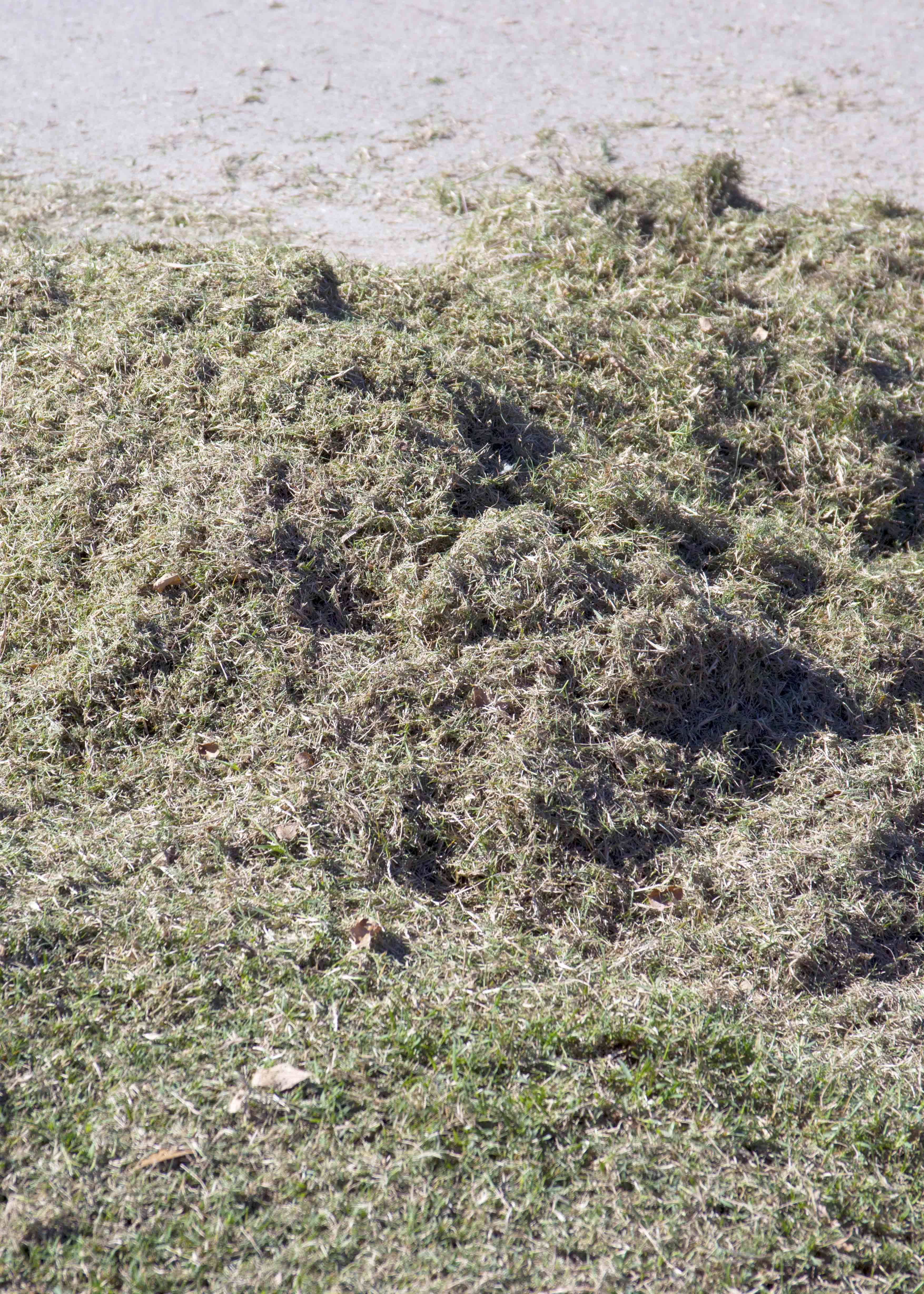 Clippings from scalping bermuda caring for my yard pinterest