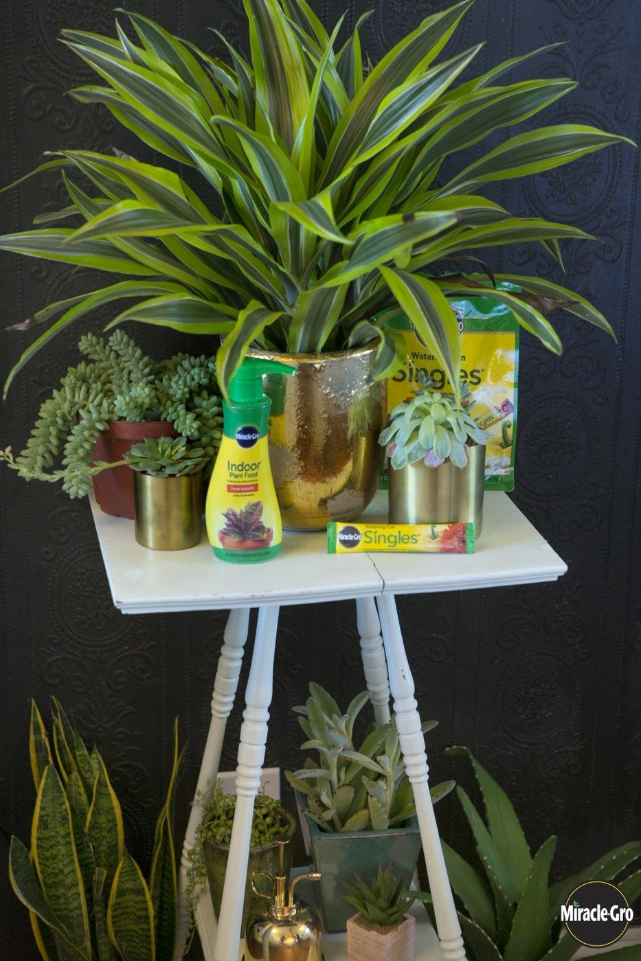 Do you have an indoor plant food routine yet? It's time to make one so your plants flourish! Click to see all the ways Miracle-Gro can help.