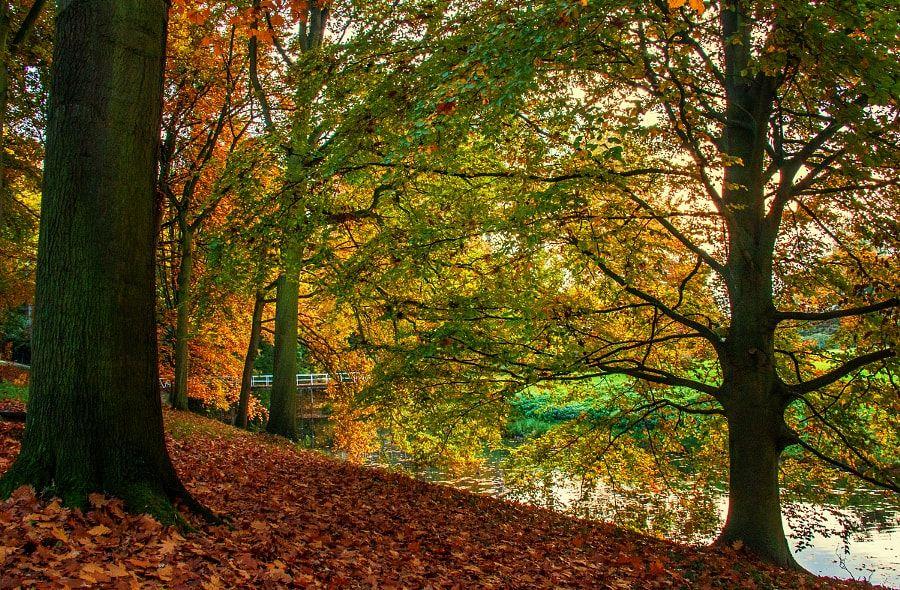 white bridge in autumn mood (no location given) by Etienne De Jonghe / 500px