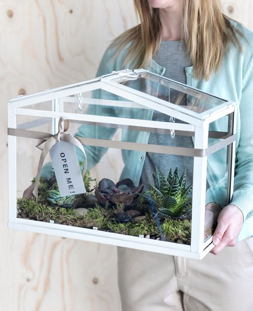 A Woman Carries An Ikea Socker Greenhouse Filled With Moss And