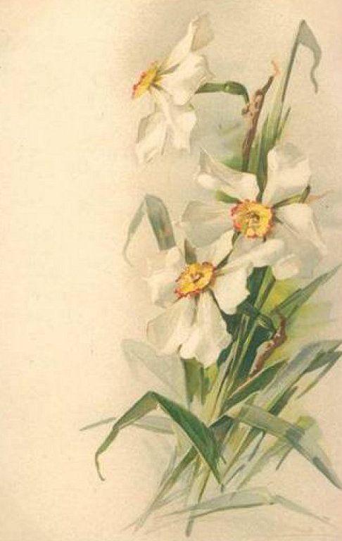 Daffodils, Catherine Klein
