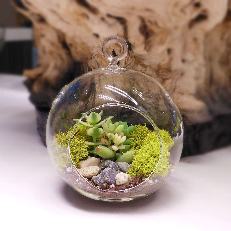 """Floralistic """"AllInclusive"""" DoItYourself DIY Terrarium"""