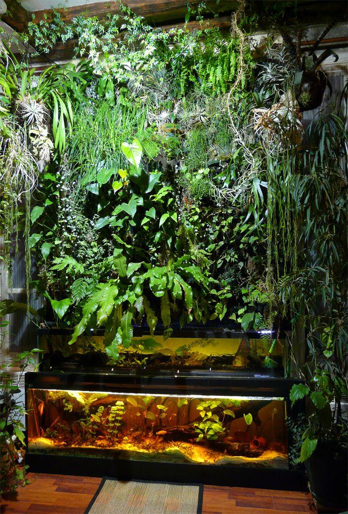 Mur végétal et aquarium