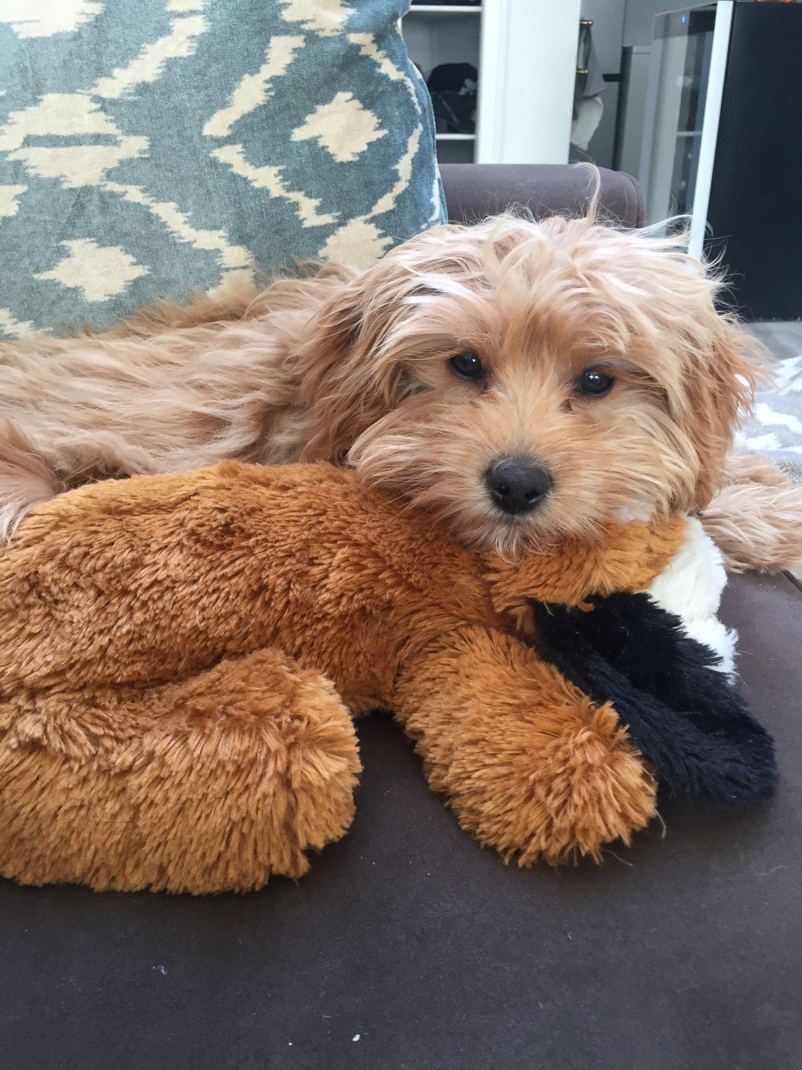 12 Things That Made Getting A Dog So Much Easier For Me Toy Puppies Puppy Snuggles Best Toys For Puppies