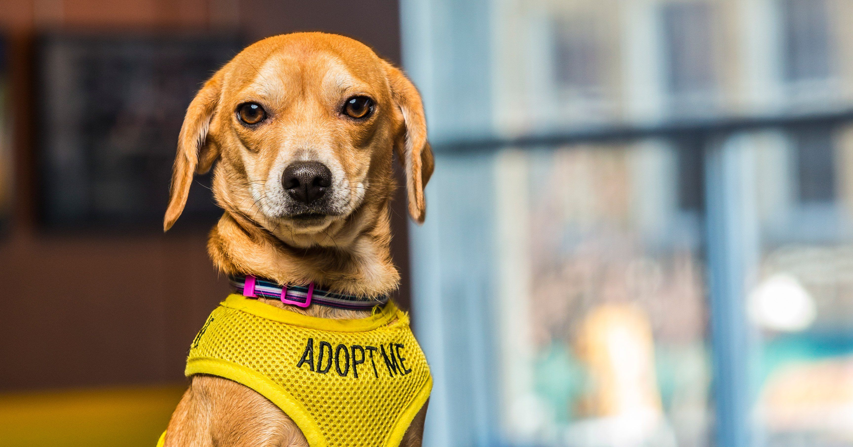 How A Hotel In Asheville Helps Rescue Dogs Pet Resort Pets Foster Dog