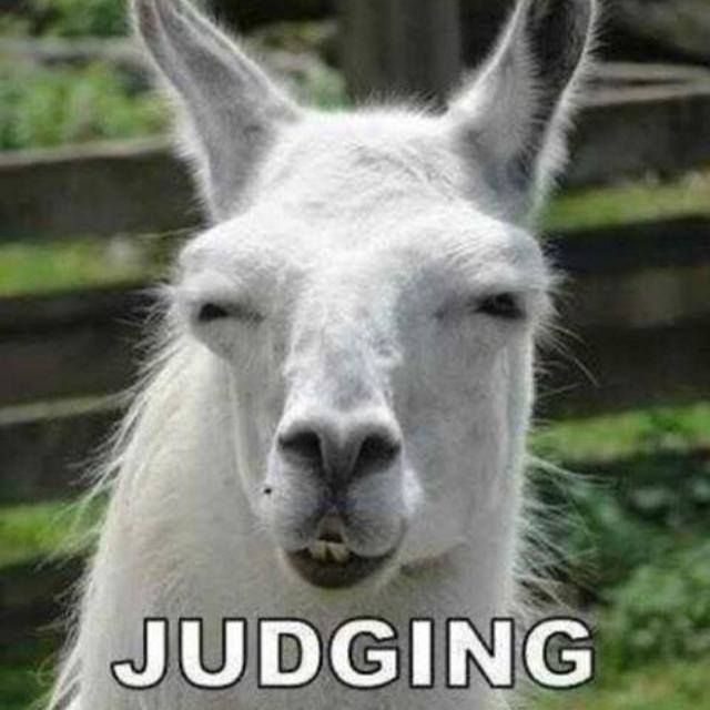 Image result for judging you llama