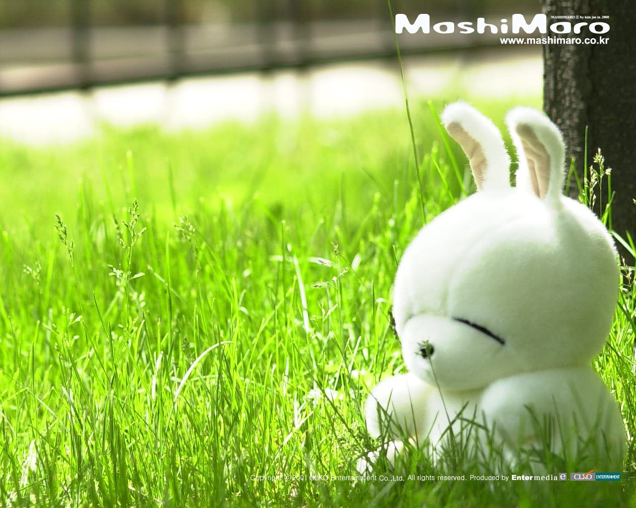 Bunny says the grass is greener painfully cute pinterest grasses