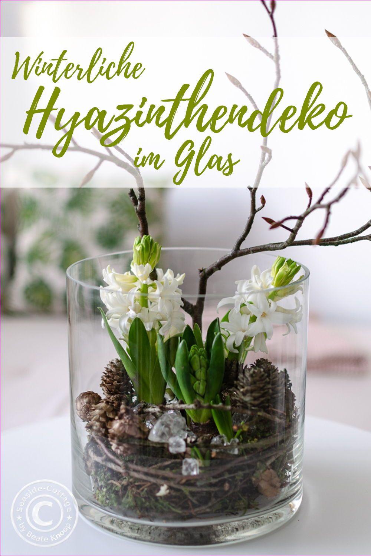 Hyazinthen im Glas winterlich dekoriert – Seaside-Cottage