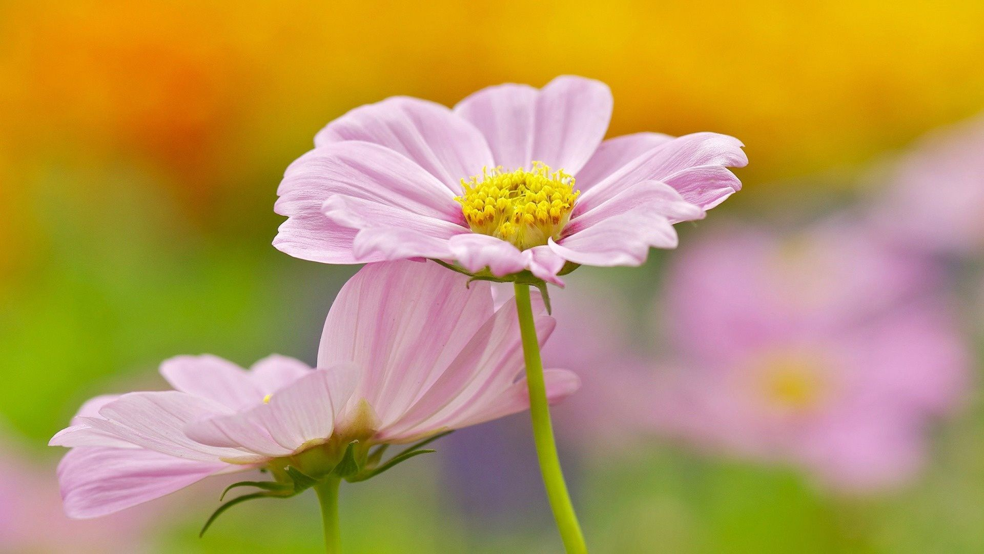cute flowers wallpapers desktop