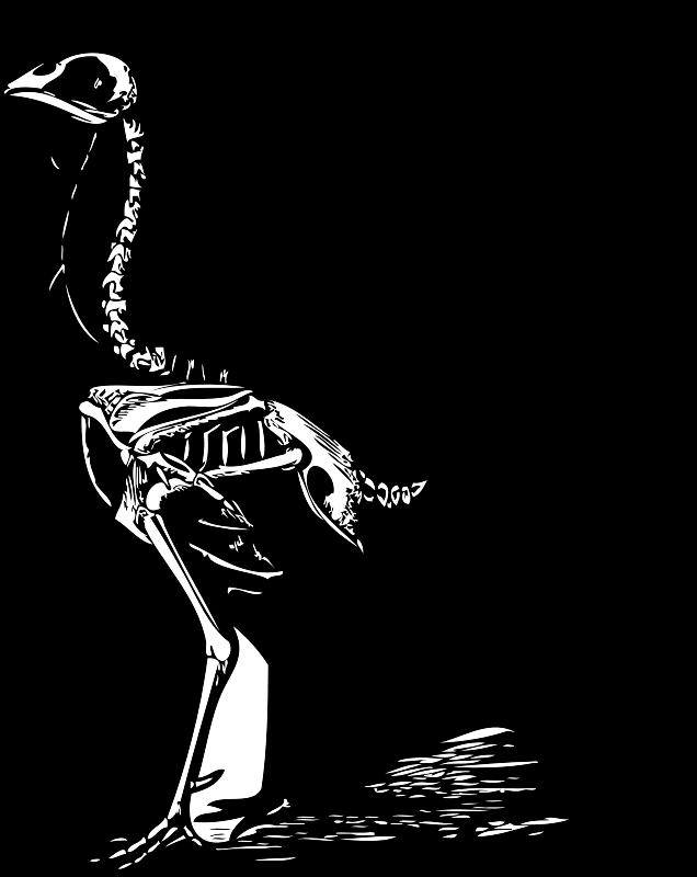 Free Clipart: Chicken skeleton | Animals | Art inspiration 2D