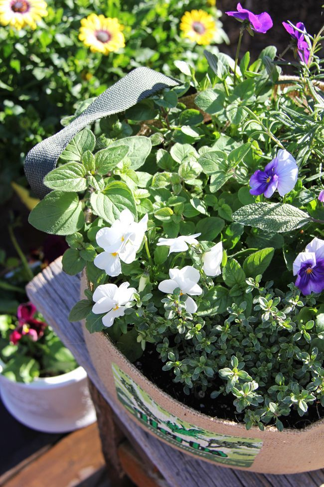 Container Gardening Ideas Ideas For Container gardening