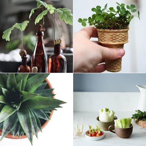 Eight takes on green thumb goodness!