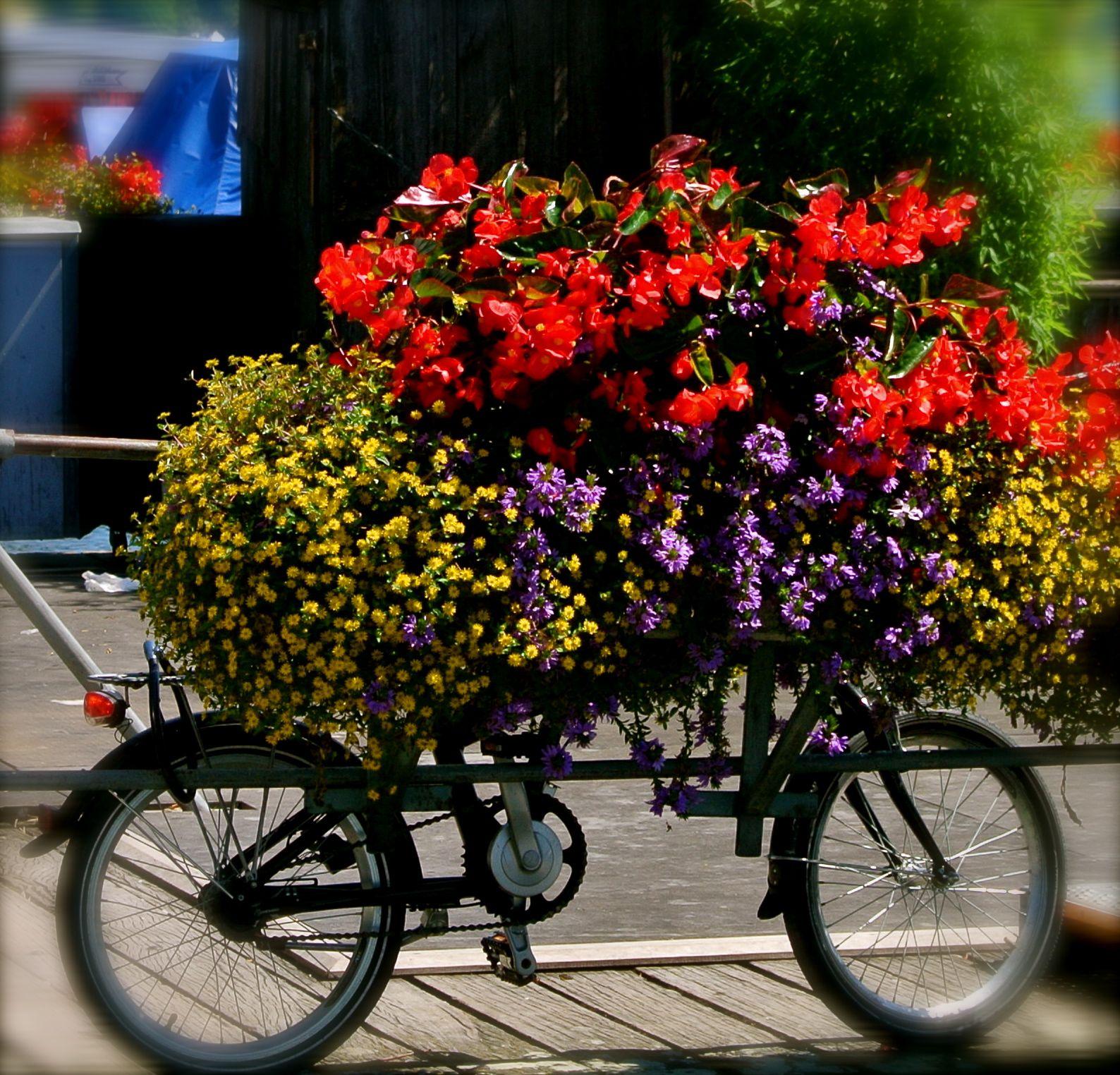 Lucern, Switzerland Flower photos, Holiday destinations