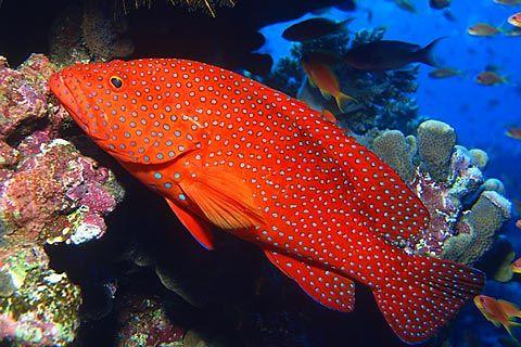 Pin on Unterwasserwelt