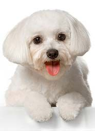 White Dog Names For Light Colored Males Female Dogs Dog Names