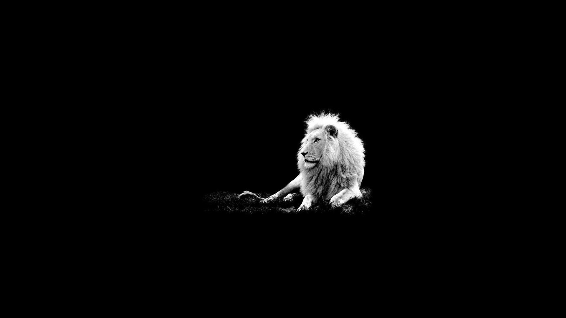 Snow Leopard Black And White Portrait Hd Desktop Wallpaper Dark Wallpaper Hd Wallpaper Lion