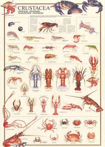 10+ Different Types of Lobster with Pictures | Lobster | Fried lobster, Lobster risotto, Lobster ...