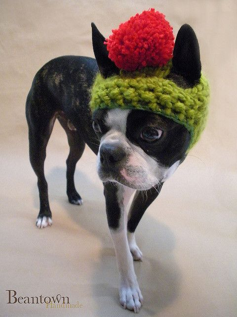 crochet dog hat free patterns | CROCHET DOG HAT - Crochet — Learn ...