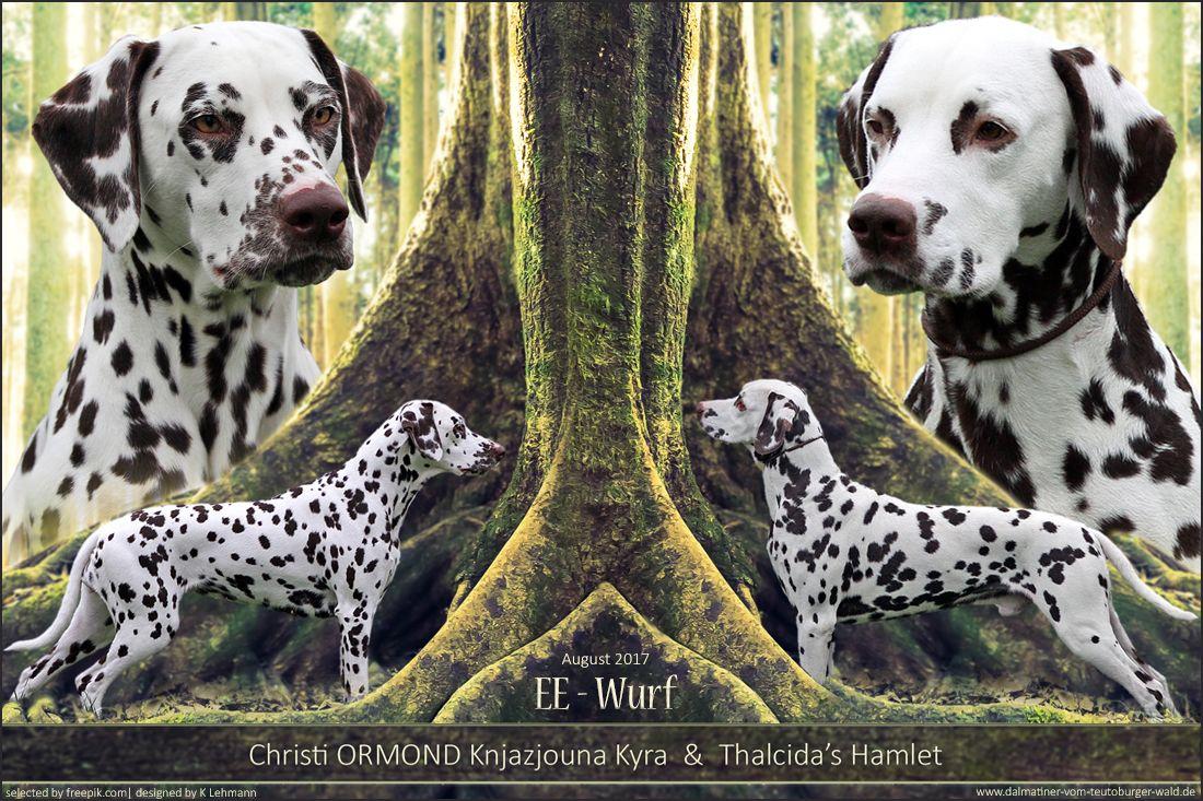 Pin Von Tina Punktchen Auf Dalmatiner Und Andere Hunde Und Zubehor