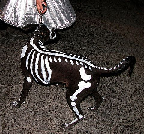 Help I Keep Trying To Bury Myself In The Back Yard Dog Skeleton CostumeZero