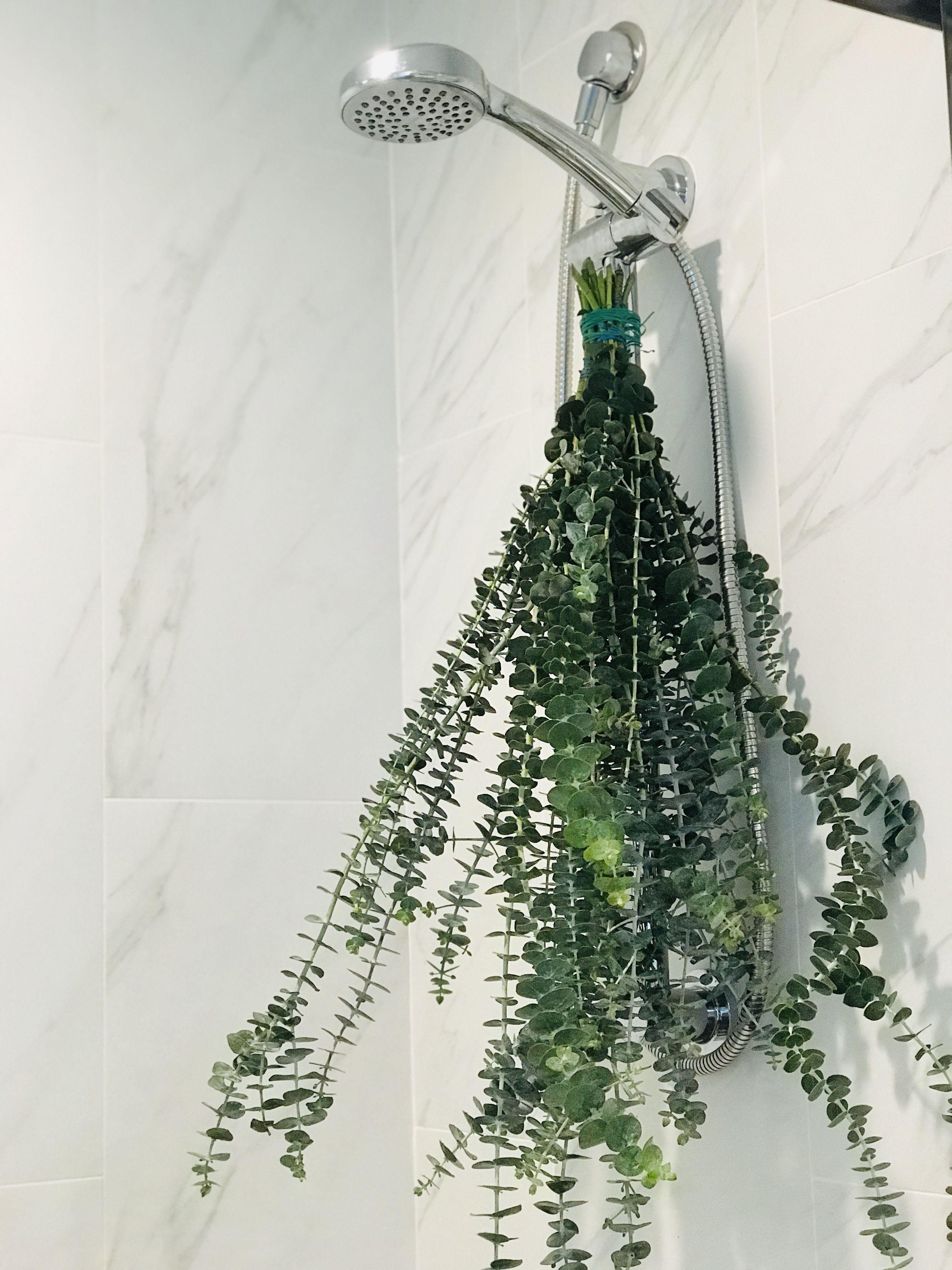 Eucalyptus Shower Naturalhomespa Pandorablossoms Eucalyptus Shower Shower Plant Fresh Eucalyptus