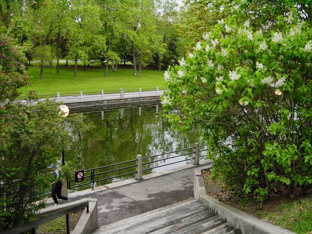 By Heather Hall Davis A Glimpse Of The Rideau Canal From
