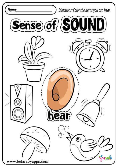 أوراق عمل عن الحواس الخمسة للأطفال جاهزة للطباعة تمارين عن الحواس الخمس بالعربي نتعلم Five Senses Worksheet Senses Preschool Preschool Activity Sheets