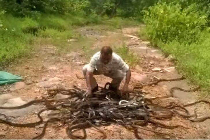 Hombre libera a 285 serpientes y no le hacen nada (Video)