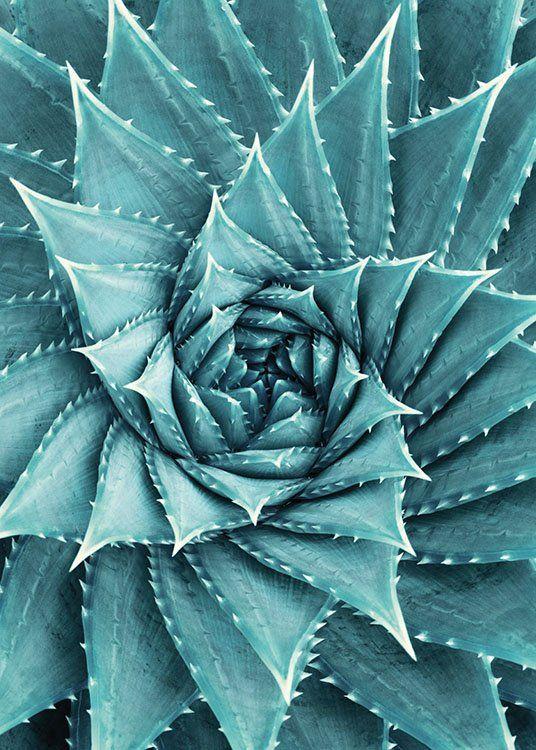 Aloe, Poster in der Gruppe Poster / Botanik bei Desenio AB (8480) #deseniobilderwand