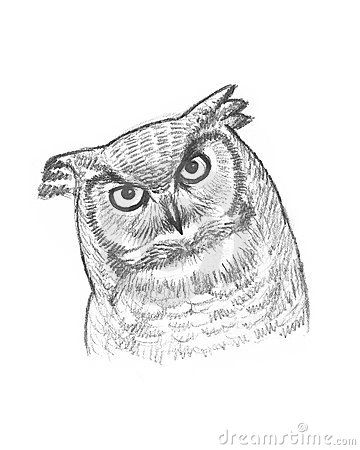 A pencil sketch of an owl