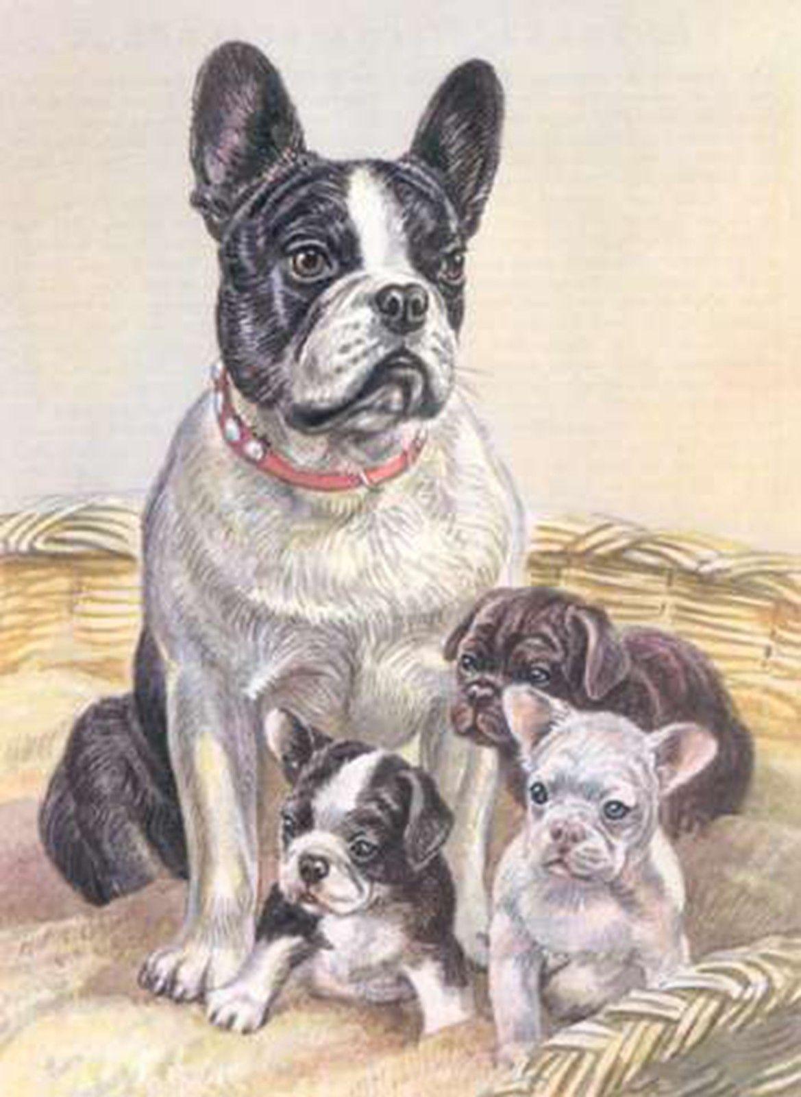 French Bulldog Pupscounted Cross Stitch Pattern 208animals Dogs
