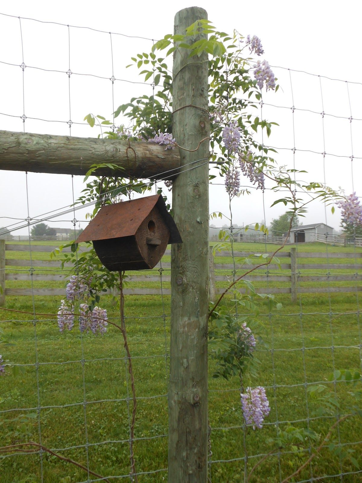 A very appropriate place for abird feeder bird house