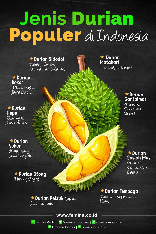 Jenis Durian Populer Di Indonesia Makanan Sehat Resep Makanan Sehat Fotografi Makanan