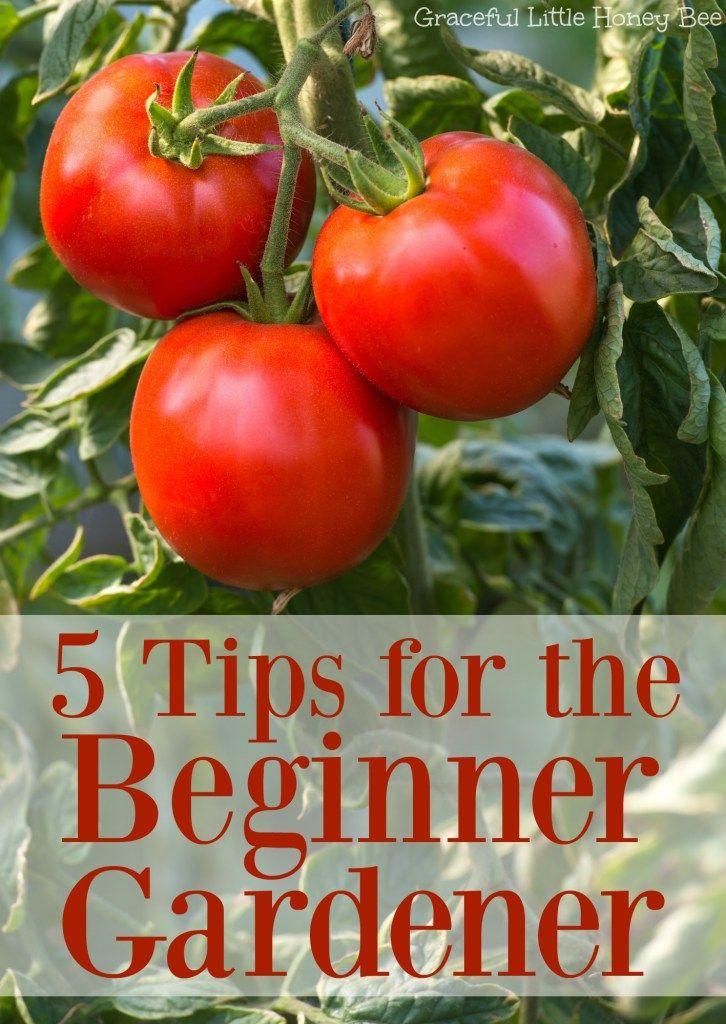 5 Tips For The Beginner Gardener Gardening For Beginners 640 x 480