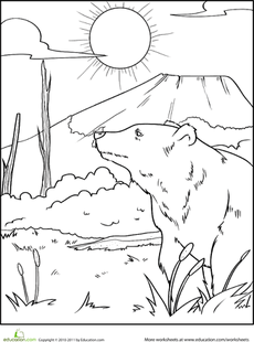 Color the Grizzly Bear Bear coloring pages, Teddy bear