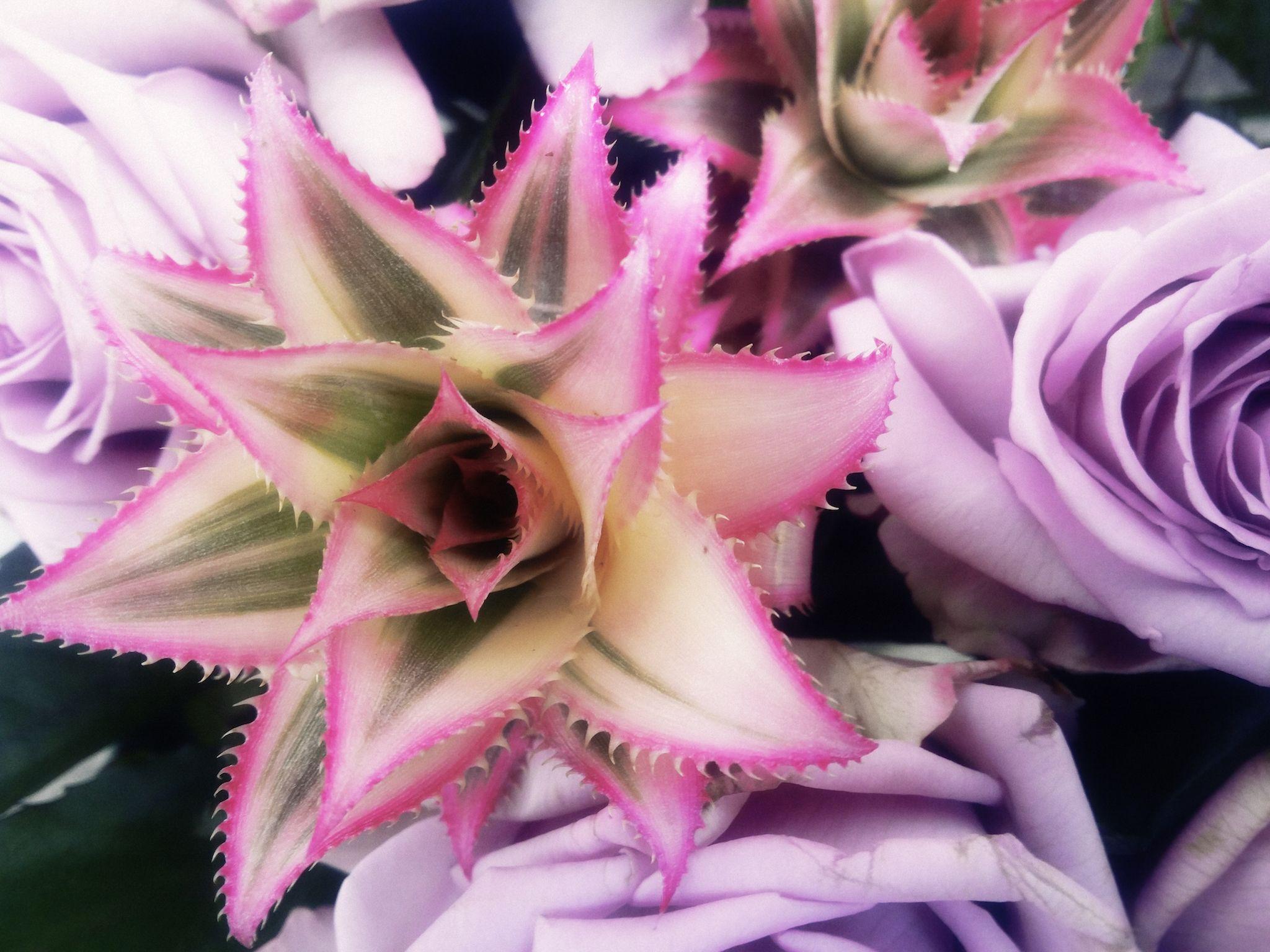 #magic #pineapple & #violette #roses a sunday: http://alicewonderland2.blogspot.co.uk/2016/04/a-faerie-tales-of-violette-sunday.html