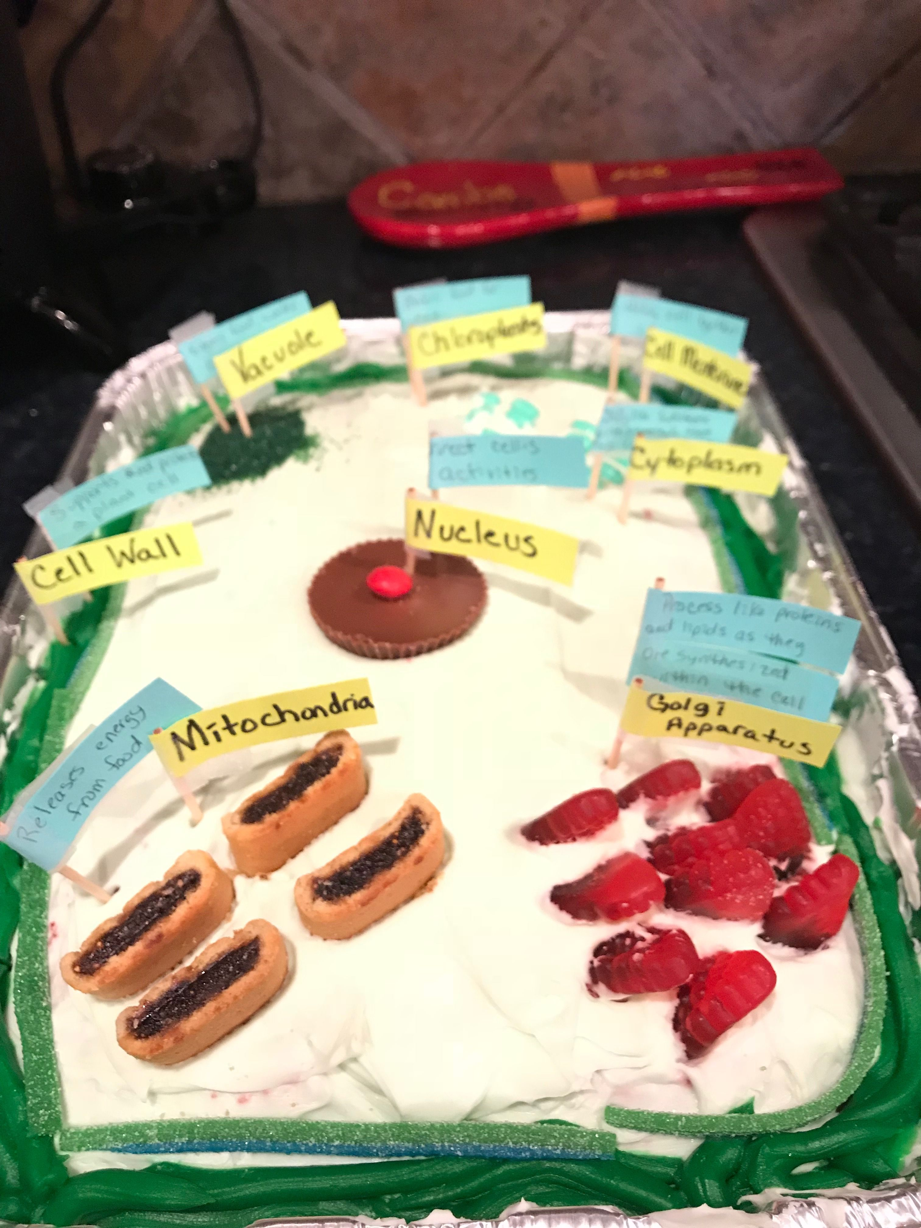 Edible plant cell by Haley   Edible cell project, Cells ...