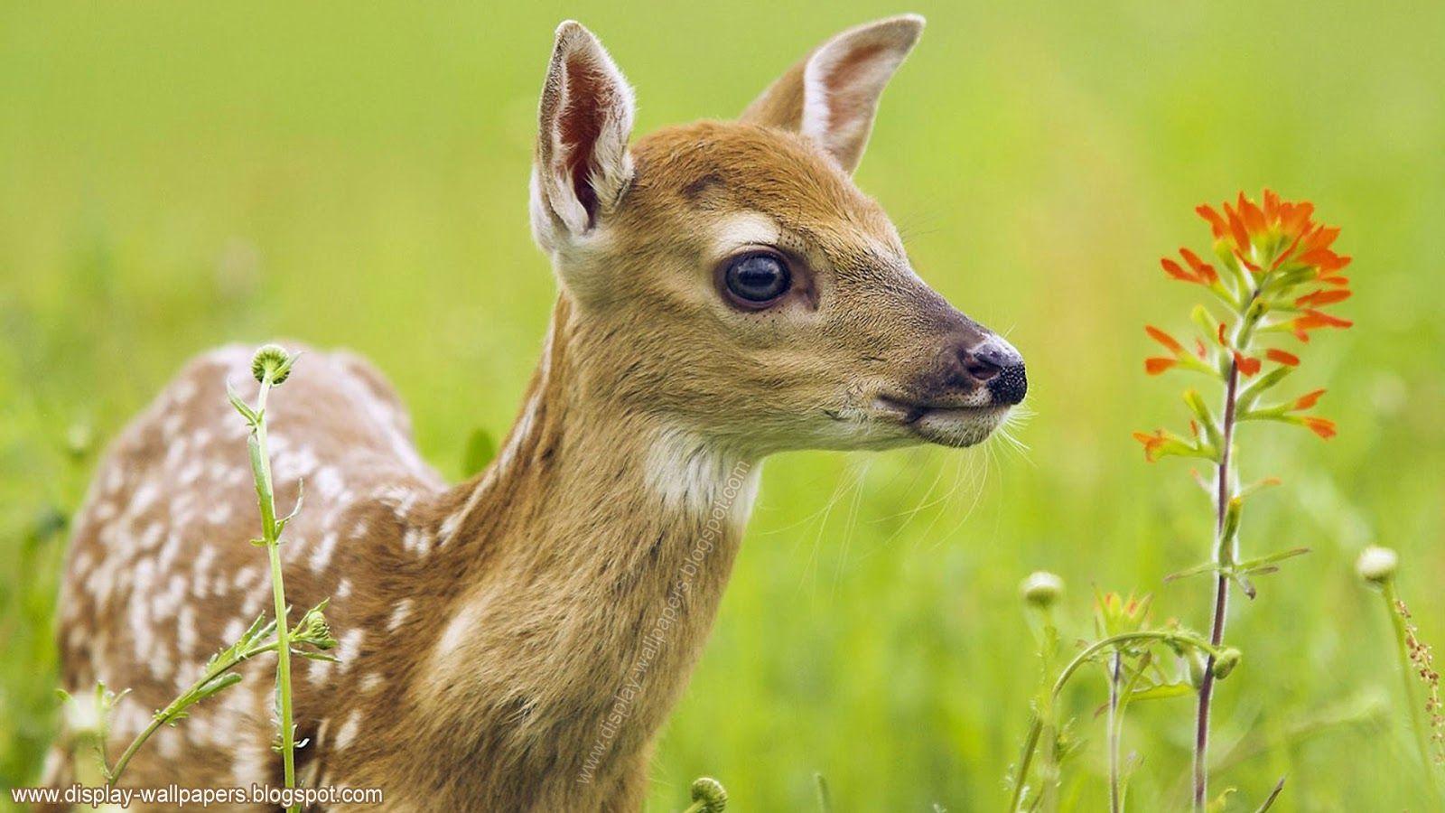 Wallpapers Download Animals Wallpaper Hd 1080p Animal Pictures Animals Images Animal Wallpaper