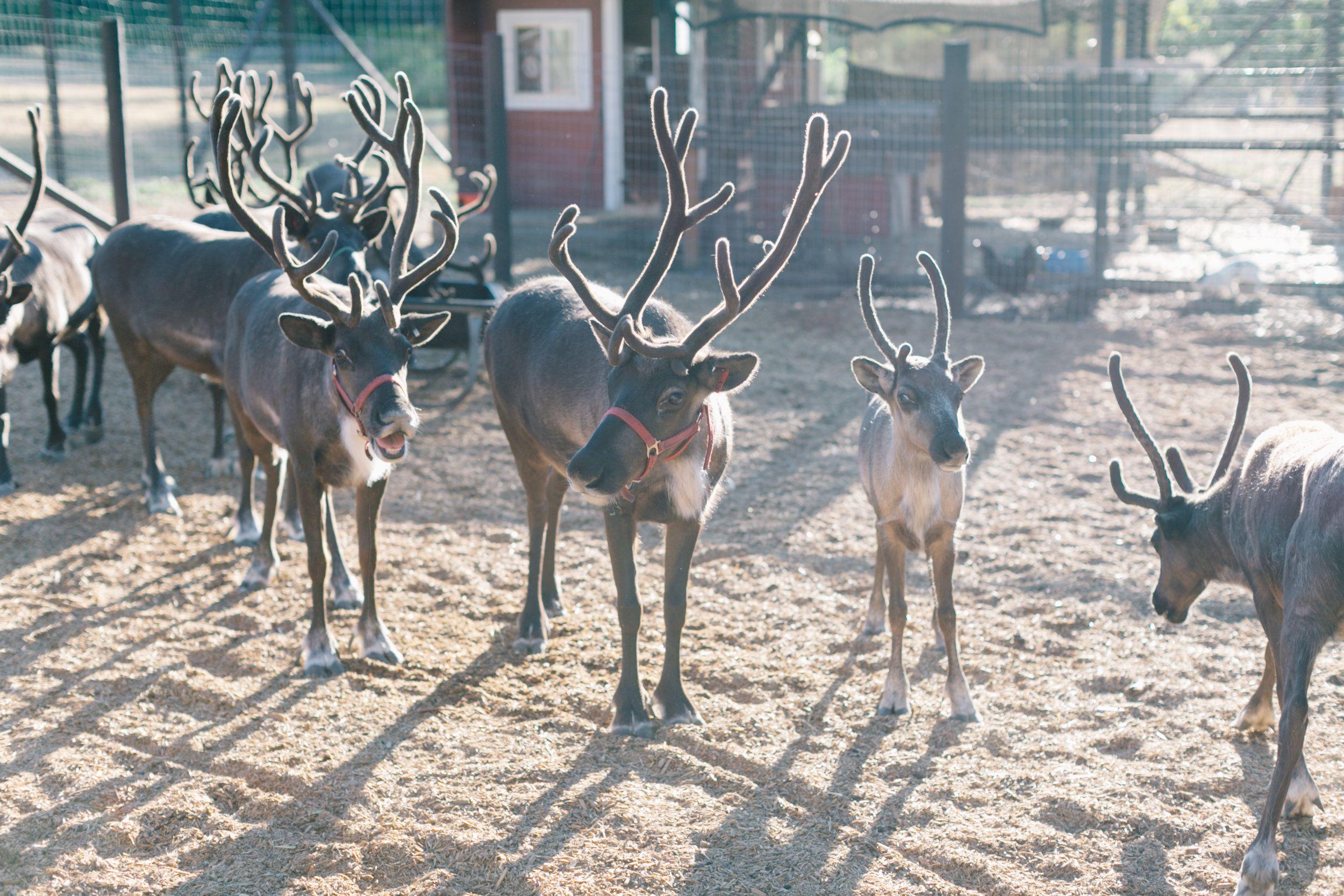 Leavenworth Reindeer Farm Leavenworth Farm Tour Leavenworth Washington