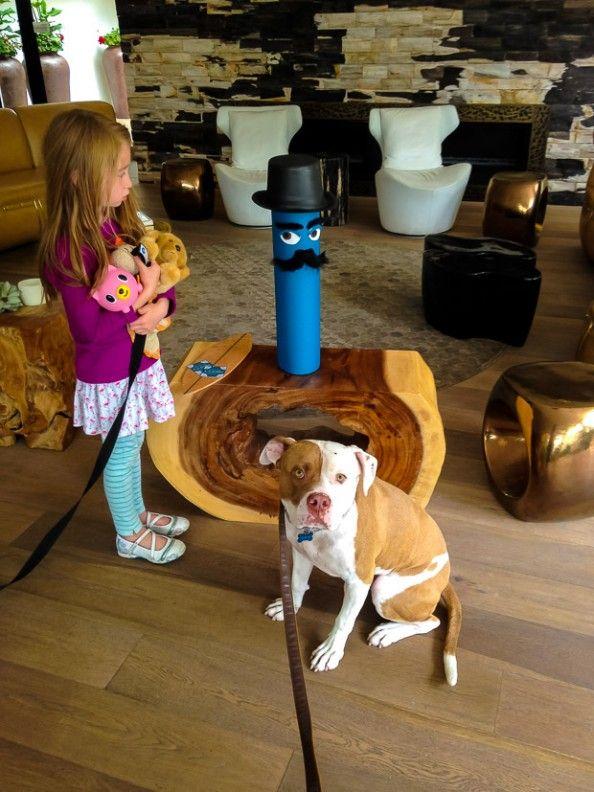 Hotel La Jolla Pet friendly hotels, Dog boarding near me