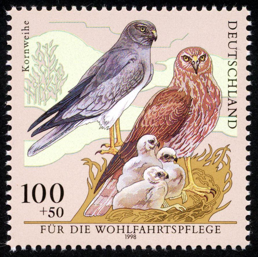 Deutschland 1998 Kornweihe (Wohlfahrt Gefährdete Vögel