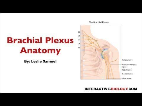 Brachial Plexus Anatomy -- I think I like the way this guy teaches ...