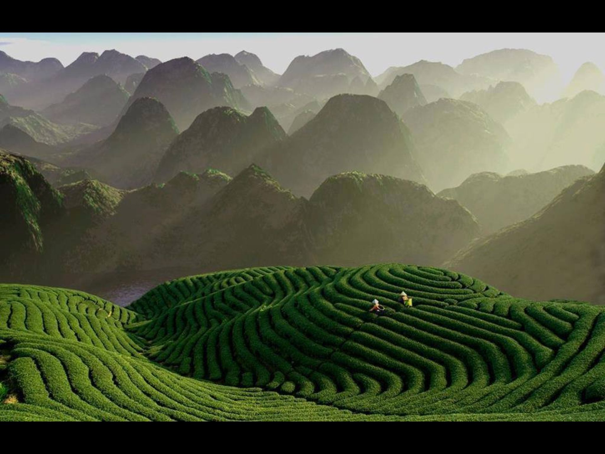 Tea plantations in Munnar. KERALA. God's Own