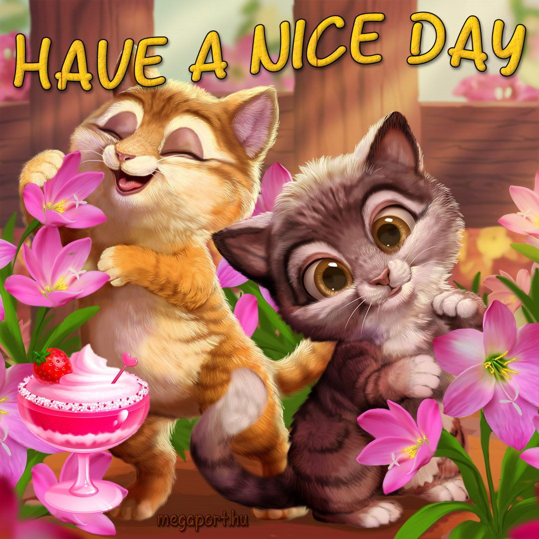 Have A Nice Day Cute Good Morning Good Morning Cat Good Morning Meme