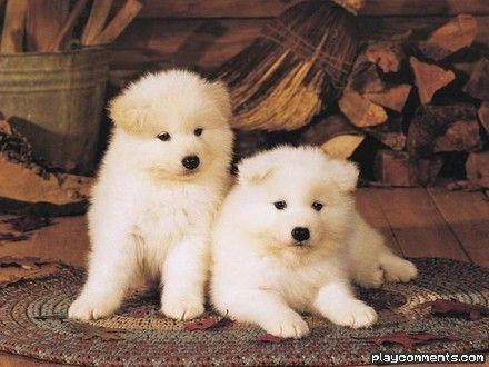 amo cachorrinhos!