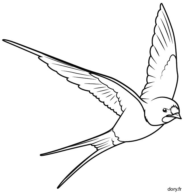 Dessin A Colorier Une Hirondelle Oiseau Coloriage Dessin A