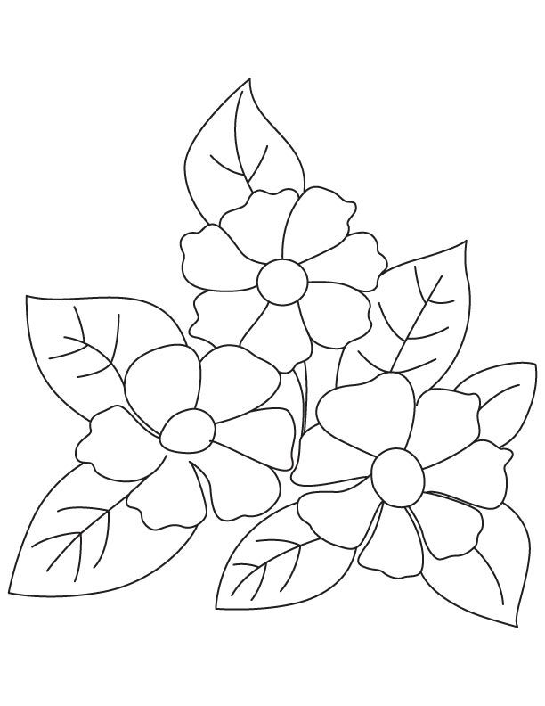 Small Camellia Flowers Coloring Page
