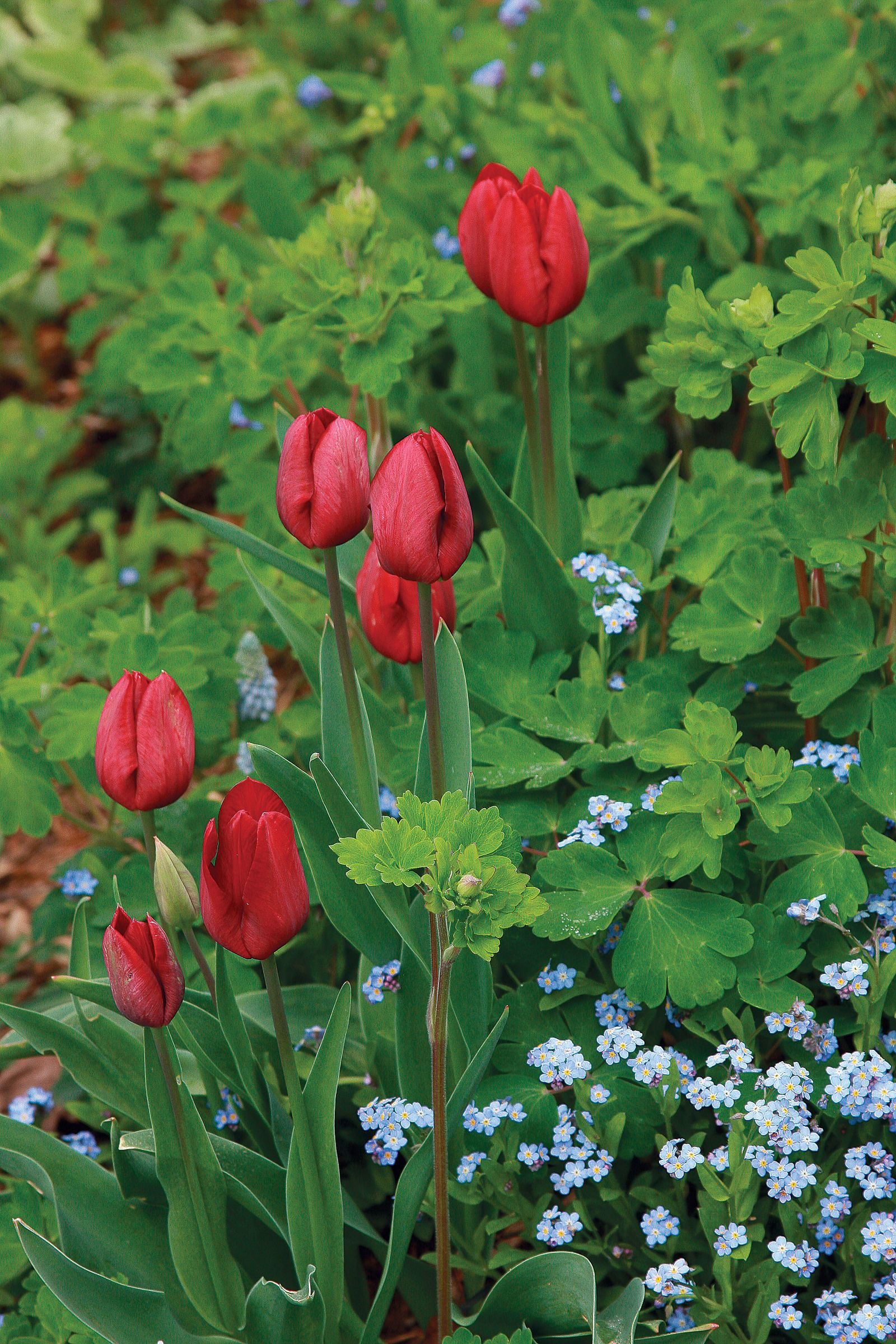 12 Spring Bulb Designs To Plant Now Red Tulips Garden Spring Bulbs Planting Bulbs