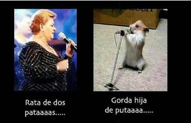 fdf84db065831cec379584f379fc112f rata de dos patas funny paisa memes pinterest spanish humor
